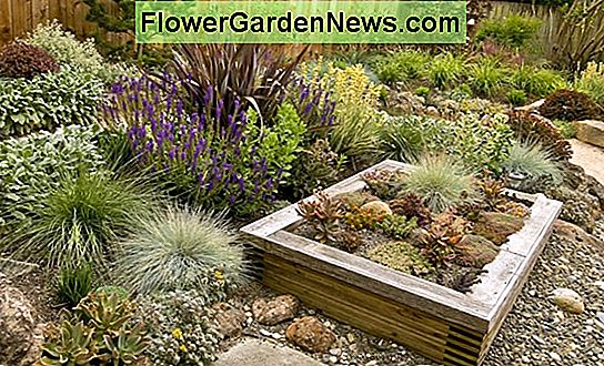 Xeriscaping di California