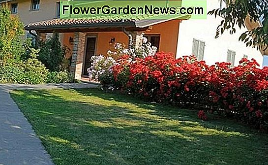 Come piantare un giardino dog-friendly