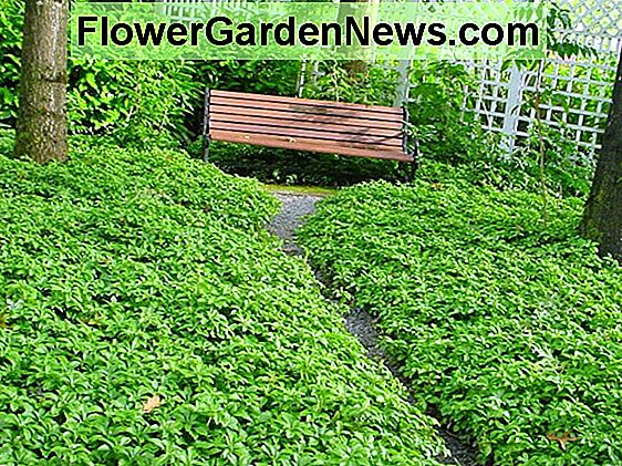 Five Great Garden Ground Cover